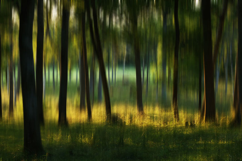 Abstarct Abstract Nature Abstract Photography Beauty In Nature Day Drastic Edit Exceptional Photographs EyeEm Best Edits EyeEmNewHere Field Forest Forrest Grass Green Color Growth Hello World Landscape Nature Outdoors Tranquil Scene Tranquility Tree Tree Trees WoodLand