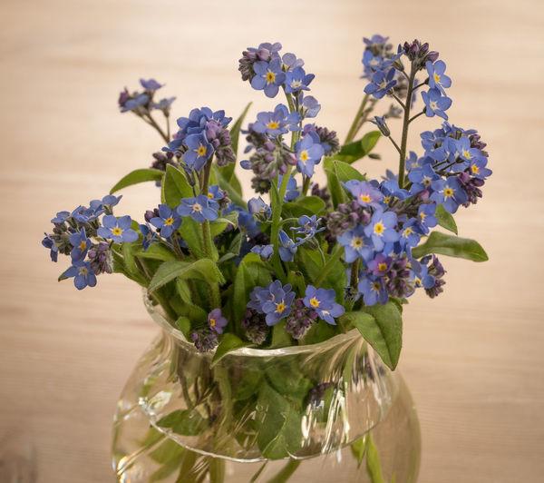Close-up of purple flowering plant in vase