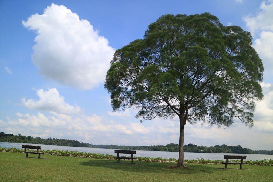 Nature Nparksbuzz Nparks Tree Bench Tranquility Upper Seletar Reservoir
