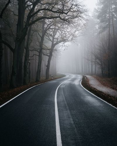 Moody Brandenburg Mood Moody EyeEm Best Edits EyeEmBestPics EyeEmNewHere EyeEm Best Shots Autumn Tree Road Direction The Way Forward Road Marking Plant Marking Sign Symbol Transportation No People Nature Asphalt Diminishing Perspective Day Empty Road Fog vanishing point Outdoors Winter