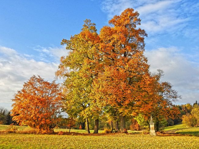 Autumn Beauty In Nature Change Day Freshness Gold Colored Growth Nature No People Outdoors Podzim Sky Stromy Tree Yellow