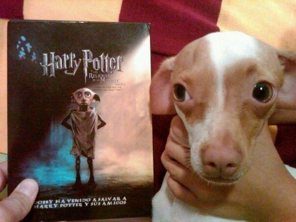 Harry Potter ⚡ Harry Potter ❤ MOVIE