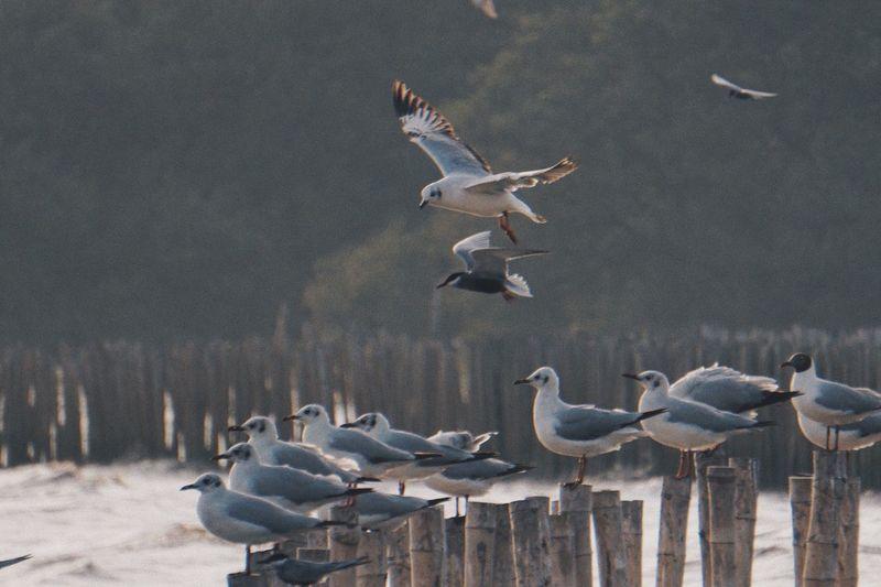 Seagulls EyeEm