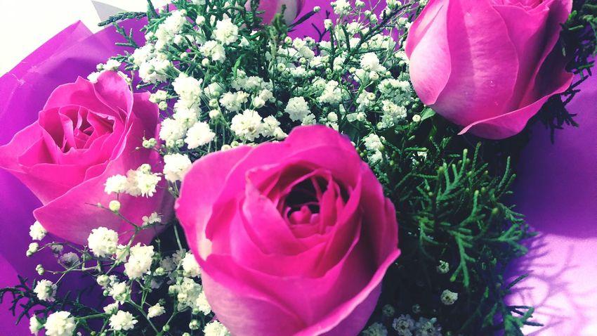 Simplicidade em cores fortes! Relaxing Rosas <3 Pink Flower Pink Rose Arte_of_nature Natureza Nature ♡ Fotography