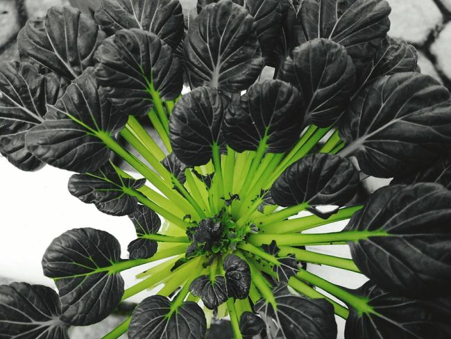 Growth Plant Green Color Nature Leaf Close-up No People Beauty In Nature Flower Day Outdoors Freshness Flower Head