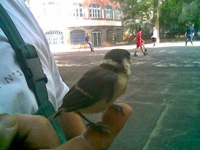 Bird Animal Photography Nature That's Me Human Hand
