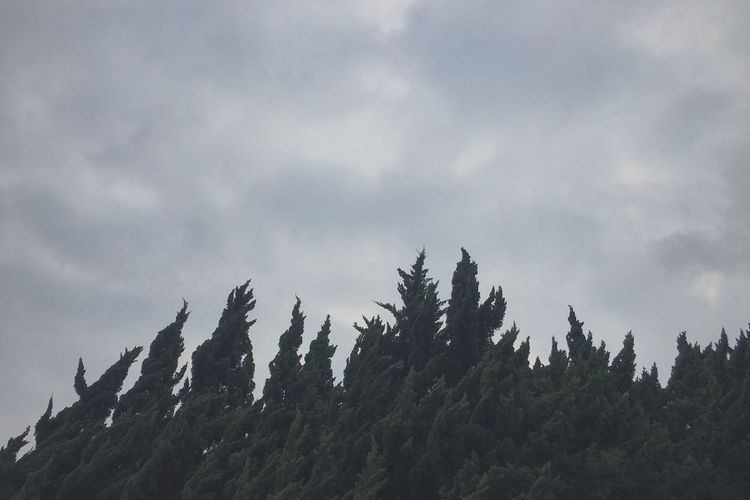 Nature Photography Nature Tree And Sky Trees Nature_collection Market
