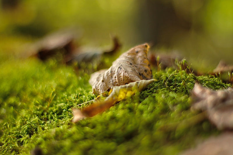 Beauty In Nature Close-up Day Fungus Grass Green Color Mushroom Nature No People Outdoors Selective Focus