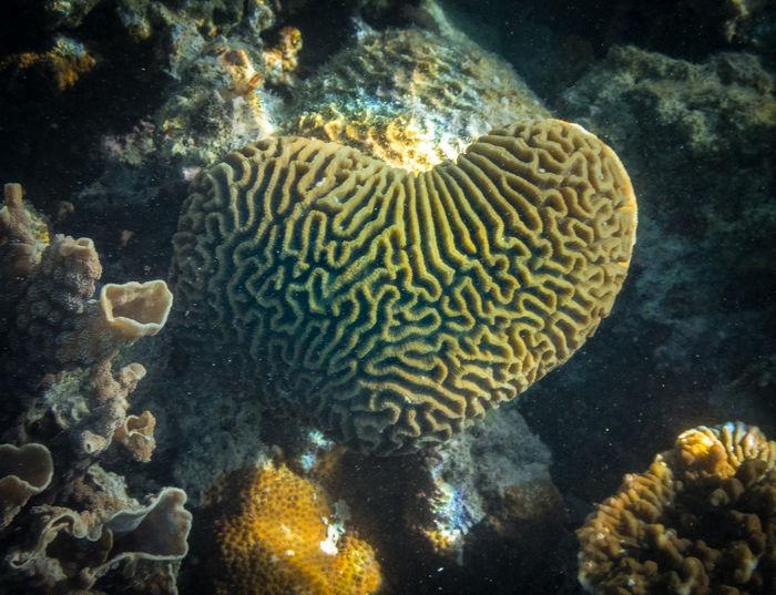 I Heart Coral!