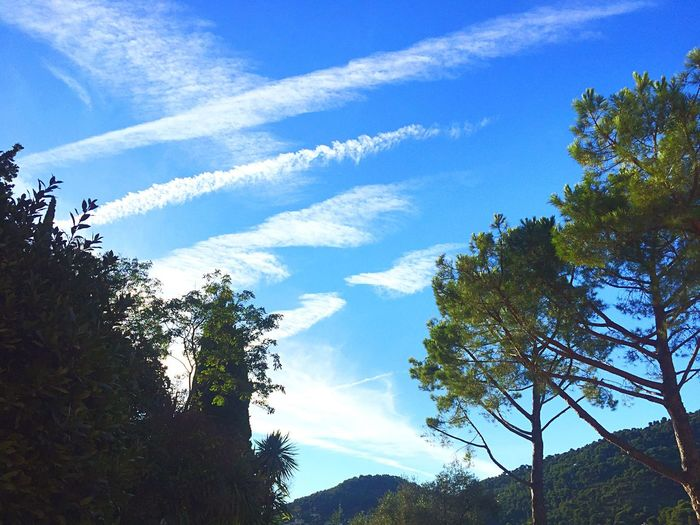 Sky Sky And Clouds Plain Track Tree Trees Pine Pinetrees Colors Côte D'Azur Green Blue Skyporn Wonderful Sky