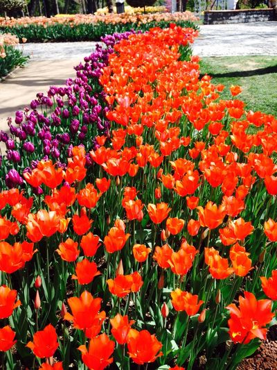 İstanbul Emirgan Korusu Flower
