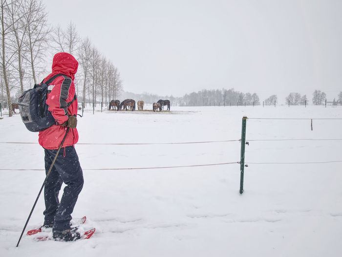 Winter hiking on snowshoes with a backpack. hiker walk around electric fence of horse paddock.