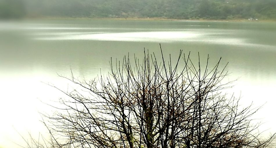 Nature No People Outdoors Beauty In Nature Tranquility Water Scenics Bare Tree Harbour Winter Quiet Reflection green