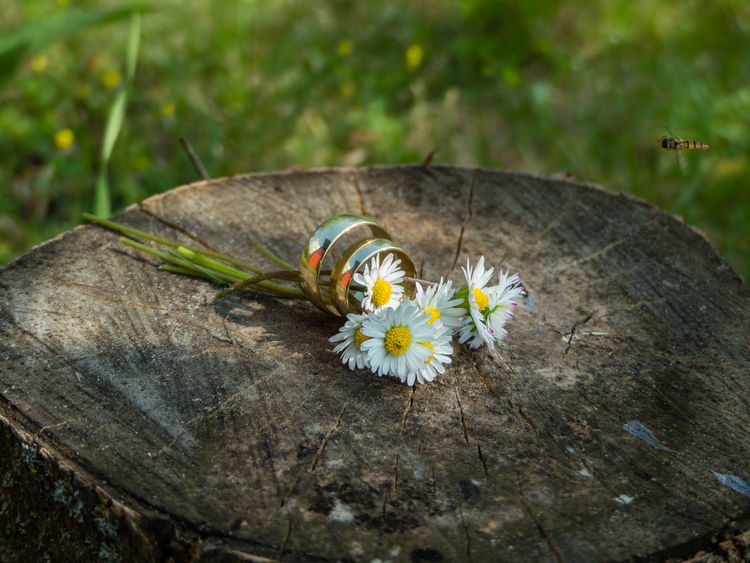 Gold Love Summertime Animal Wildlife Animals In The Wild Close-up Couples Flower Flower Head Just Merried Mageriten No People Rings Wood - Material The Still Life Photographer - 2018 EyeEm Awards