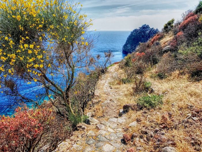 Italy Island Ponza Sky Plant Nature Water Tree Day No People Architecture Scenics - Nature Multi Colored Land Beach Tranquility Outdoors Growth Sunlight Cloud - Sky Sea Beauty In Nature