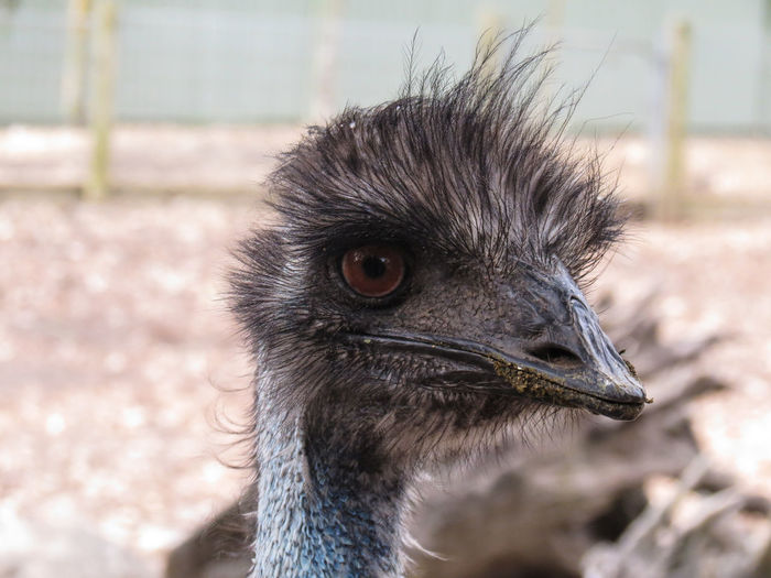 Alertness Animal Animal Body Part Animal Eye Animal Hair Animal Head  Animal Themes Beak Bird Of Prey Black Color Close-up Day Focus On Foreground Looking Away Mammal Nature No People Ostrich Outdoors Part Of Portrait Selective Focus