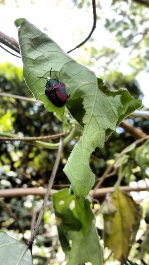 ChincheNature Green Color Insect One Animal Day Close-up Animals In The Wild Beauty In Nature Plant Bugs Bugslife Redbug Intense Colors