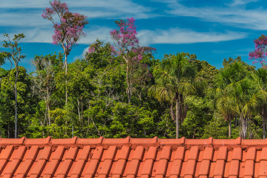 Forest In Bloom Amazon Amazonas-Brasil Beauty In Nature Bloom Blooming Flower Day Green Color Growth Nature No People Outdoors Plant Red Roof Sky Tiled Roof  Tree
