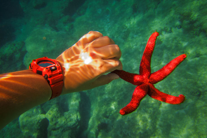 Starfish Casio Casio G-shock Casiowatch Diving Experience Holding Holiday Human Body Part Human Hand Nature Red Red Starfish Red Watch Sea Life Starfish  Summer Summertime Tough UnderSea Underwater Watch Watches Watches⌚️ Water