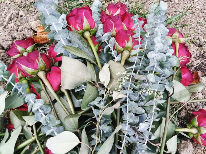 Beautiful Disaster. Rosesfortheonceliving Rosesonagrave Roses Love