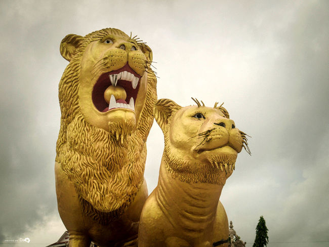 Hai chú sư tử! Art Cambodia Cool Lion Nature Nice Scenery Shots Shihanoukville