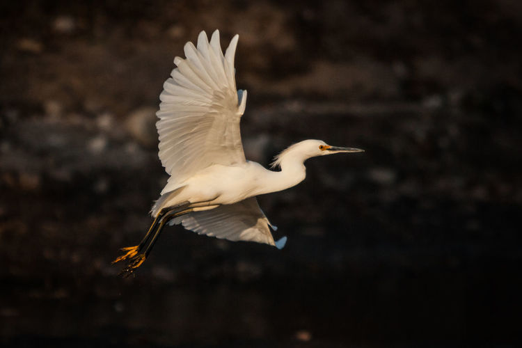 Side view of a bird flying