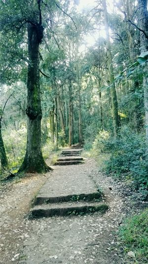 Woods Outdoors Greenery Tree Nature Beauty In Nature Plant Tranquil Scene Sunlight Tranquility Growth No People