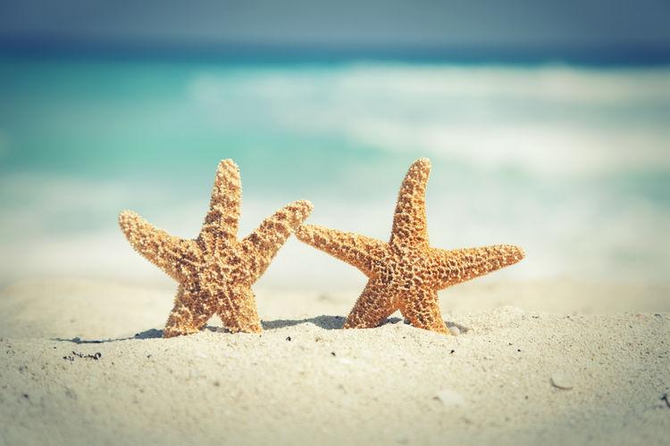 Close-up of starfish on sand at beach