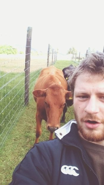 Just hanging out with my friends Hanging Out Cows Farm Life Beardlife