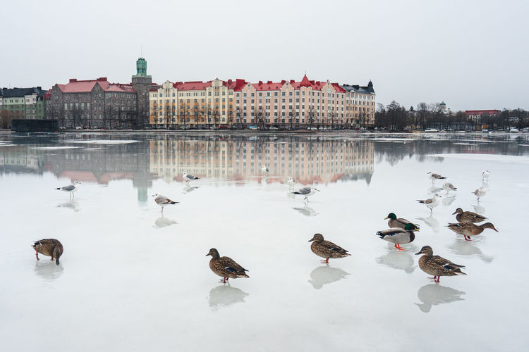 View of birds in lake during winter