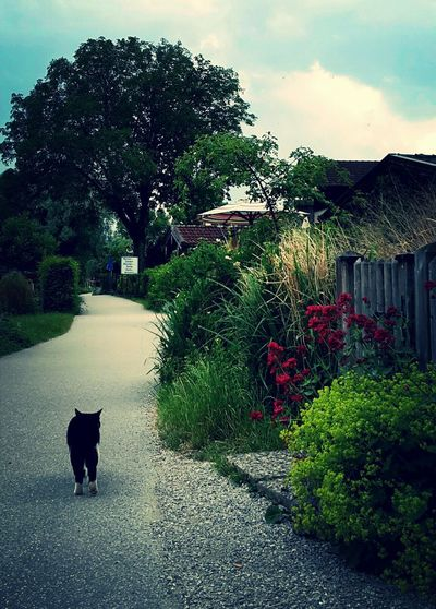 Cat Walking Catwalk Lonely Cat Animal Animal Themes Cat Cat Alone Cat On The Road Fraueninsel Gardens Pets