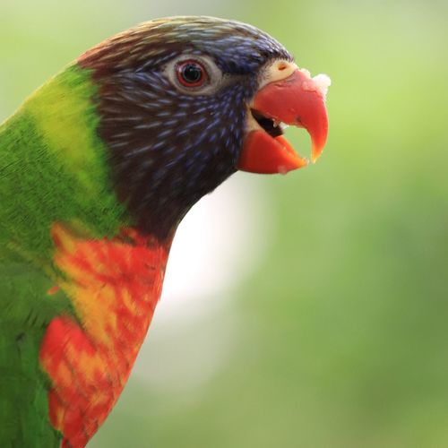 parrot with
