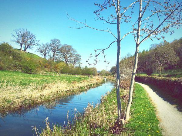 Joy of walking in the spring sunshine ( Newtown Powys - Welshpool) Canal Footpath Walking Spring Wales Sunshine Water Enjoying Life