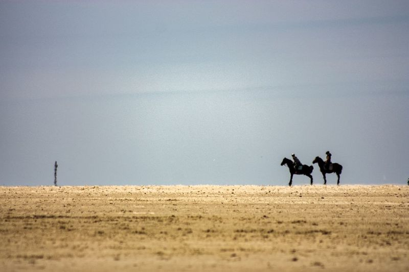 Two riders Sankt Peter-Ording Schleswig-Holstein Eiderstedt Nordsee Norddeutschland Germany Travel Beach Travel Photography Land Men Nature Mammal Sky Domestic Animals Horseback Riding Day Real People Environment Domestic People Togetherness Beach Outdoors