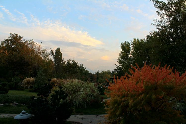 Tree Tranquility Tranquil Scene Sky Plant Growth Scenics Cloud - Sky Nature Beauty In Nature Non-urban Scene Park Cloud Garden Day Outdoors Footpath Formal Garden Solitude Majestic Japanese Garden Japanmountains Without Filters Original