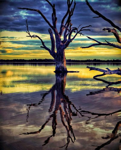 Lake Bonney South Australia. Taking Photos Nature_collection EyeEm Nature Lover EyeEm Selects EyeEm Gallery Eye4photography  Reflection_collection Eyeemphotography EyeEm Reflection Sunset #sun #clouds #skylovers #sky #nature #beautifulinnature #naturalbeauty #photography #landscape Naturelovers Nature Sunset Silhouettes Reflections In The Water Tree Bare Tree Tree Trunk Branch Sky Landscape Cloud - Sky Standing Water Dramatic Sky Dead Tree Moody Sky Single Tree Sunset Lakeside Cloudscape