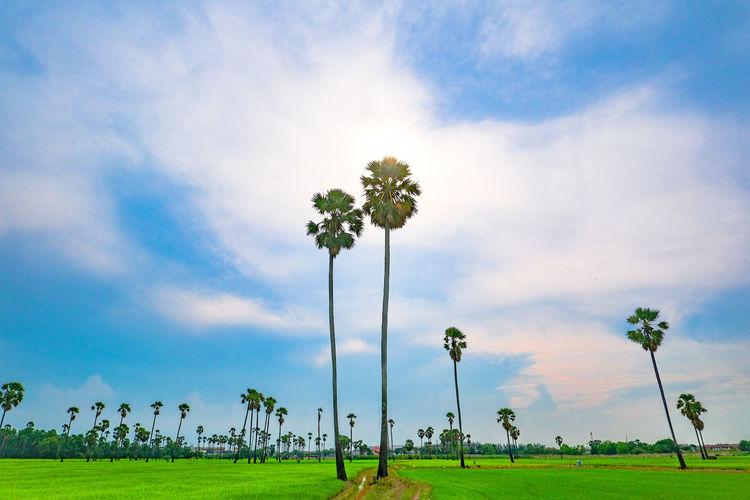 Scenic view of grassy field against sky sugar plum