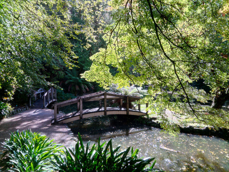 Alfred Nicholas Gardens- Dandenong Ranges- Victoria Australia Alfred Nicholas Gardens Australia Autumn Beauty In Nature Bridge Dandenong Ranges DandenongRanges Gardens Green Perfect Day For Photography Refelctions Scenics Serenity Sunlight Tranquil Scene Trees Victoria Water