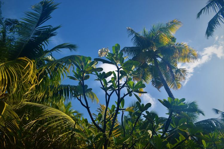 Beauty In Nature Cloud - Sky Coconut Palm Tree Day Green Color Growth Leaf Low Angle View Nature No People Outdoors Palm Leaf Palm Tree Plant Plant Part Scenics - Nature Sky Sunlight Tranquil Scene Tranquility Tree Tropical Climate Tropical Tree