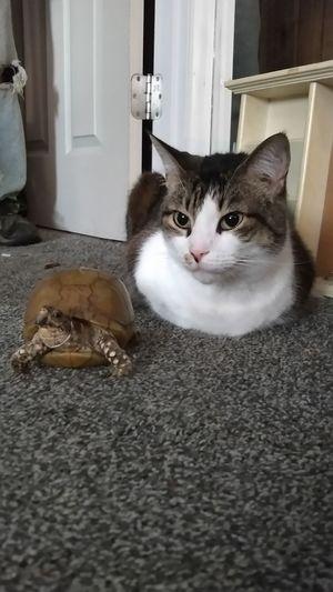 Aww Wurtle Dexter Bestfriends