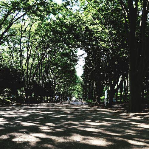 東京都町田市より。鶴間公園の木漏れ日はいつもきれい。