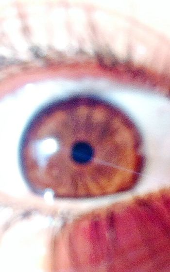 The truely are the window to the soul.. Brown Eyes