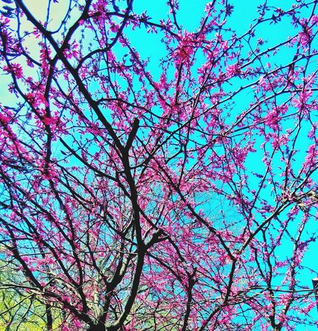 Tree Low Angle View Sky Growth Branch No People Outdoors Day Fragility Cloud - Sky Backgrounds Freshness Spring Has Arrived Lexington Kentucky  Neighborhood Map Mix Yourself A Good Time The Week On EyeEm Perspectives On Nature Colour Your Horizn Summer Exploratorium