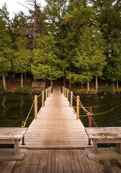 Wooden boardwalk amidst trees