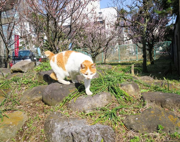 Stray Cat Cat Watching Cat Catsagram Animals at Minatoku 芝公園 in Tokyo Japan