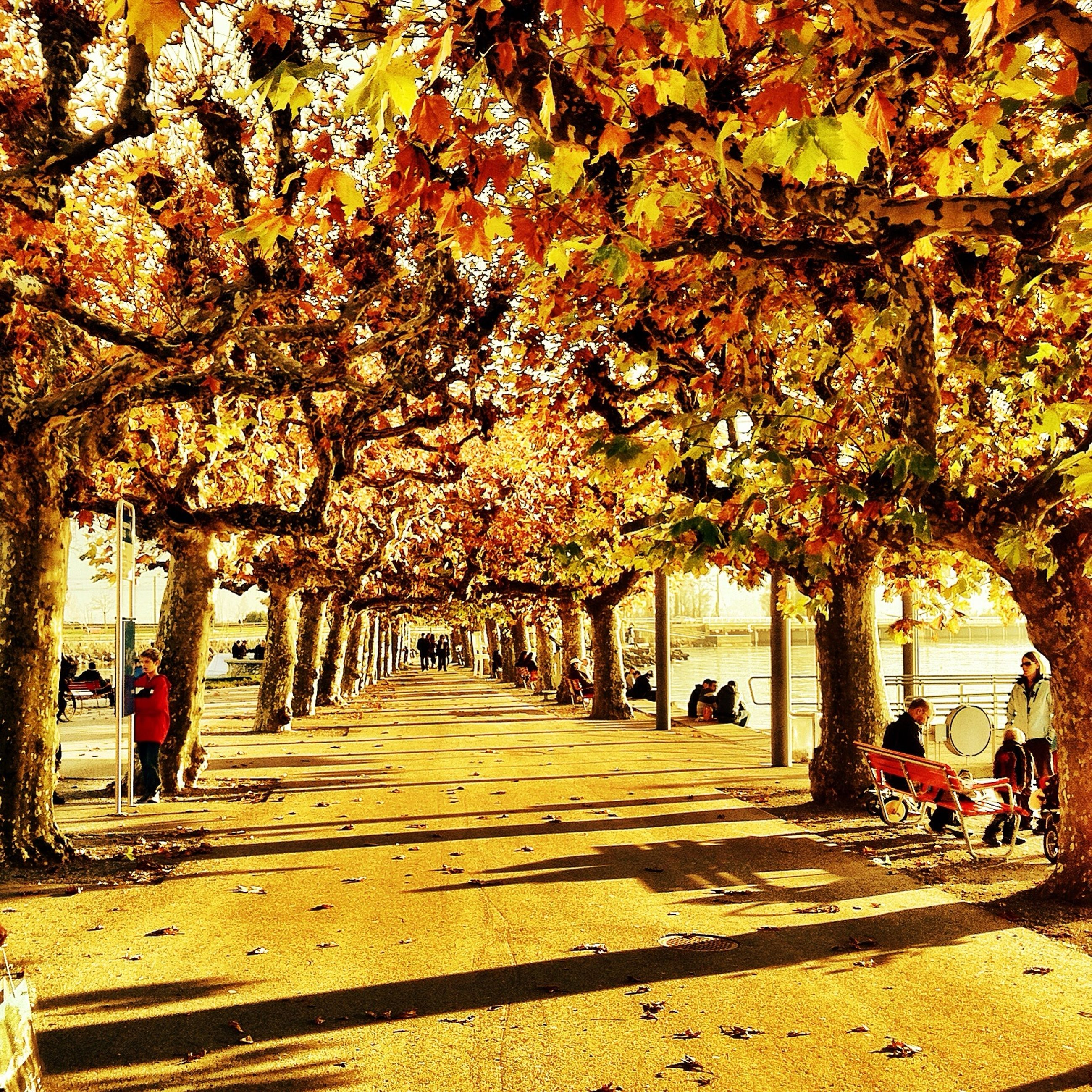 tree, autumn, the way forward, change, person, park - man made space, treelined, men, diminishing perspective, growth, footpath, season, incidental people, leaf, lifestyles, transportation, day, large group of people, branch