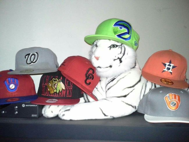 protector of my hats Whitetiger 59fifty