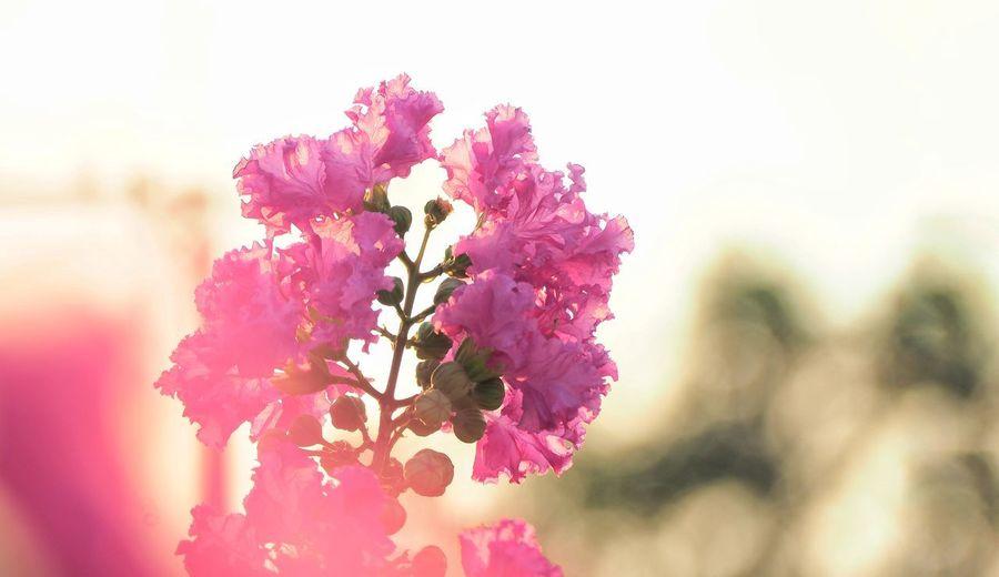 Flower Head Flower Tree Springtime Pink Color Defocused Petal Blossom Pastel Colored Close-up Plant Life Flowering Plant Orchid Cherry Blossom Cherry Tree Pistil In Bloom Botanical Garden Orchard Pollen Blooming Botany Apple Blossom Fruit Tree Stamen Crocus Twig Lilac