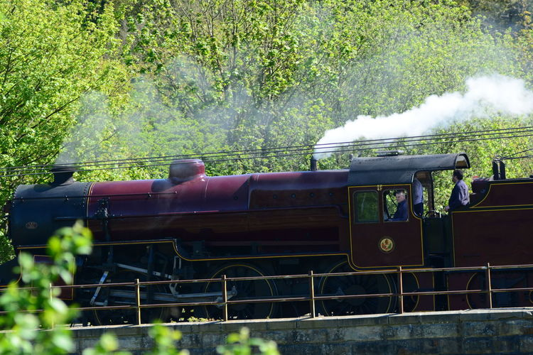 Day Grass Locomotive Mode Of Transport Nature No People Outdoors Public Transportation Rail Transportation Smoke - Physical Structure Steam Train Steaming Train Train - Vehicle Transportation Tree