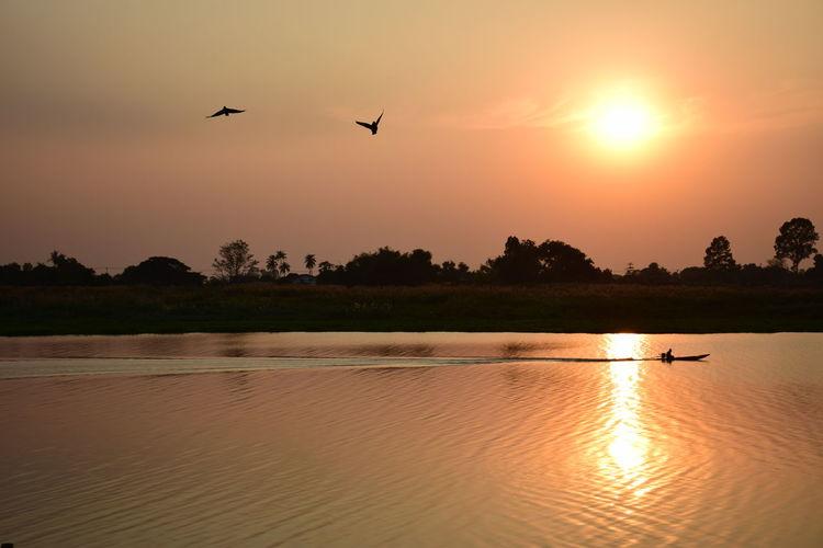 Silhouette birds flying over lake during sunset